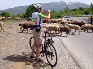 MCD Sheep Cyclist Macedonia